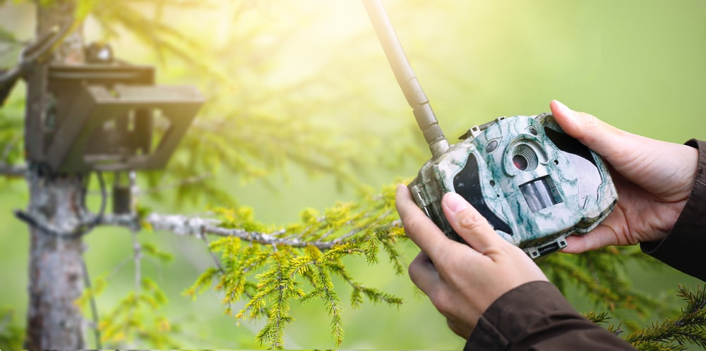 Looking for a Trail Camera? Here Are the Best Trail Cameras That Send Pictures to Your Phone